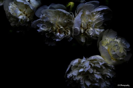 White in the Dark by LSPhotographyStore