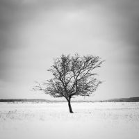 Tree by Freggoboy