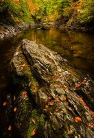 Autumn on the River Tilt by Greg-McKinnon