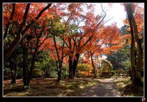 Momiji Road I by tensai-riot
