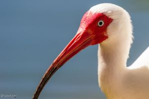 Another ibis 1 by CyclicalCore