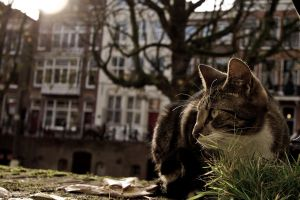 Canal cat is following me by Z-GrimV