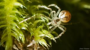 Spider traversing moss by Dunadan-from-Bag-End