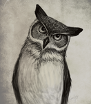 Owl Sketch by xRuffian