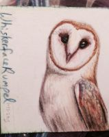A Lovely Barn Owl by WhiskerfaceRumpel
