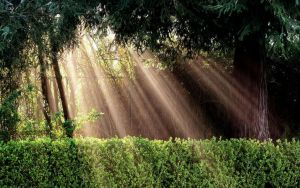 [Stock] Sun rays through the trees by Molncie