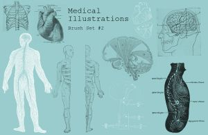 Medical Illustration Brushes 2 by VectorPixel
