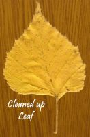 Leaf II cleaned-up stock by AnnFrost-stock