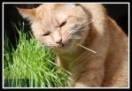 Bubbers in Grass is Good 12 by MaganEdinger
