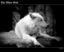 The White Wolf by mithro