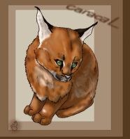 Caracal by SearraLee