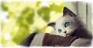 cat by hyunhon