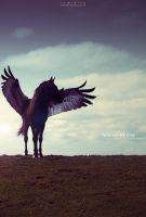 Now we are Free by Almirith7