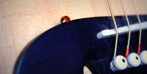 Ladybug by CarianneCouture