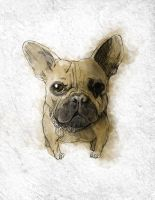 Sole the Frenchie by Asprine