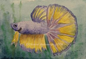 Watercolor and Ink #19 -  Betta Fish by Oksana007