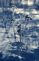 Frosty Morning II by Rustmouth