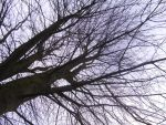Just looking up a tree :) by DestructiveShadow
