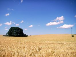 Grain, tree and clouds by WojTT