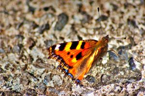 a butterfly on the yard floor by speed-demon