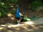 Philadelphia Zoo 4 by Dracoart-Stock