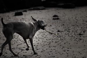 Dog at the beach by BELFASTBAP