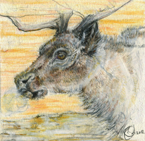 Reindeer spirit ACEO by ghostwolfen