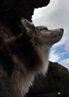 the howling by kilted1ecosse