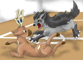 Gym battle: Mightyena-Stantler by Yuutaime