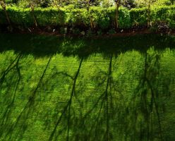 green trees by awjay