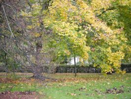 Yellow Autumn leaves. by asaluiphotography