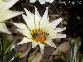 Busy Bee by christiline88