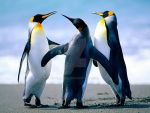 Penguins by fahd550
