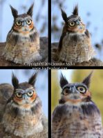 Rowan, the Great Horned Owl by Nambroth