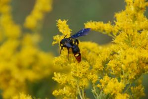 Wasp by GONE-EVERLONG