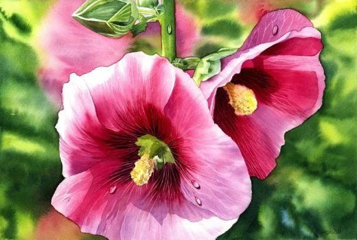 Hollyhock by Shelter85
