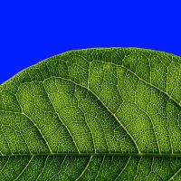 green leaf blue sky by augenweide