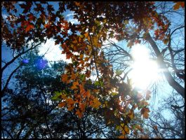Autumn I by PDWeasel