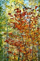 Stained Glass Autumn by M-Lewis