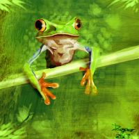 The frog by Dauganor