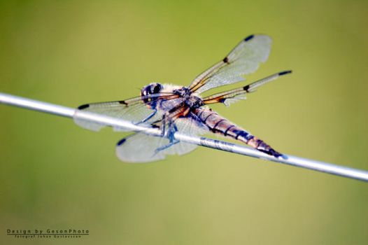 Dragon-fly by geeson