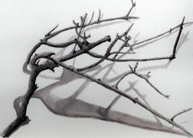 Another tree branch by Saelian