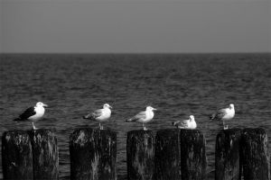 seagulls by siwymortis