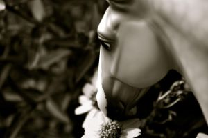 Take Time To Smell The Flowers BW Version by Icepetal21