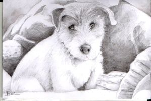 Puppy sketch by Pacbee