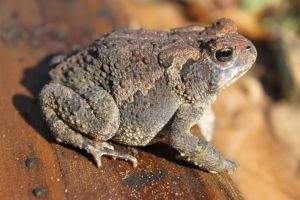 Ribbit Stock-1 by Stock-Tography