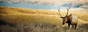 Deer FB Cover by LMA-Design