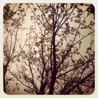 ~A Sky Full of Blossoms~ by Belynx16