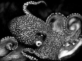 Octopus-bw by acostamt