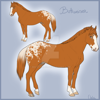 Buttweiser's Ref by BH-Stables